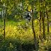 Travel through Sunderbans Tiger Reserve