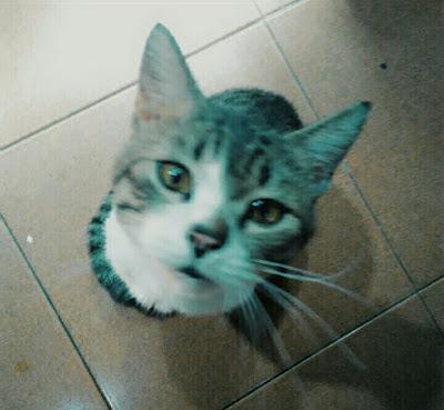 kucing-tidak-boleh-gemuk