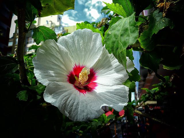 Flor balnaca entre follaje verde