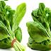 Spinach meaning in hindi, Spanish, tamil, telugu, malayalam, urdu, kannada name, gujarati, in marathi, indian name, marathi, tamil, english, other names called as, translation