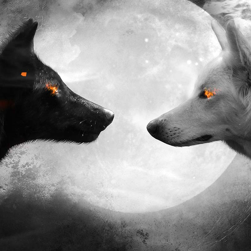 Black And White Wolf Wallpaper Engine