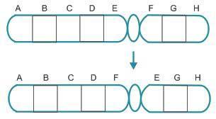 Soal Latihan dan Jawaban Mutasi Gen Kromosom