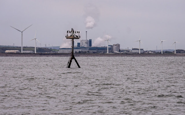 Photo of cormorants on a navigational mark with the Iggesund paperboard factory in the background