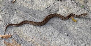 Late season snake on the path
