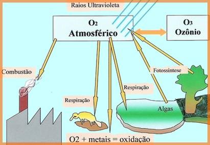 Ciclo Do Oxigênio Bioquímica Biologia Portal Escola