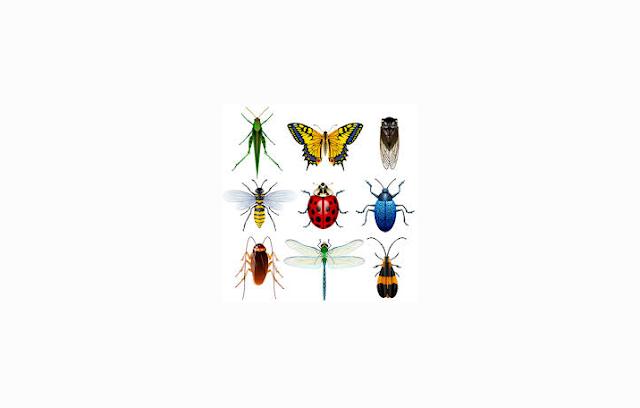 Pengertian dan Ciri Insecta