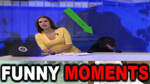 desirable dog jumps into russian information broadcast