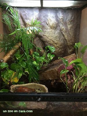 Pequeño terrario para un macho de Geoemyda spengleri