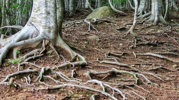 Tree root growth fall and winter