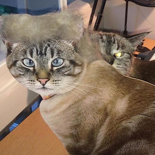 Những chú mèo có mái tóc thời thượng nhất