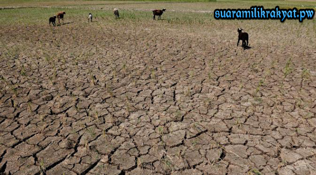 Warga Ngrandah Kabupaten Grobogan Di Puncak kekeringan