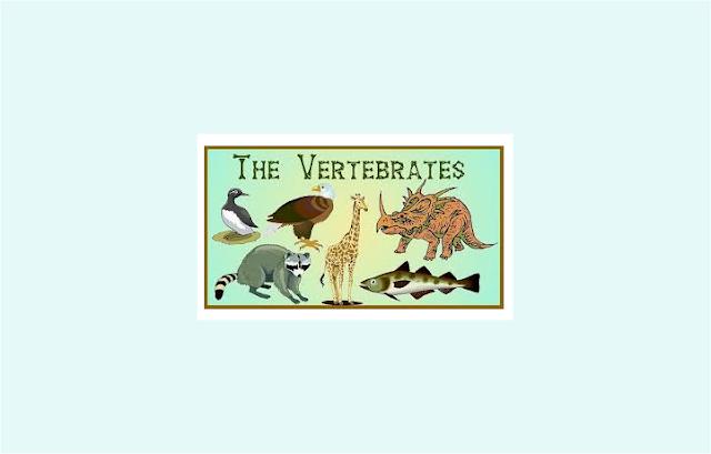 Pengertian Vertebrata, Klasifikasi Vertebrata