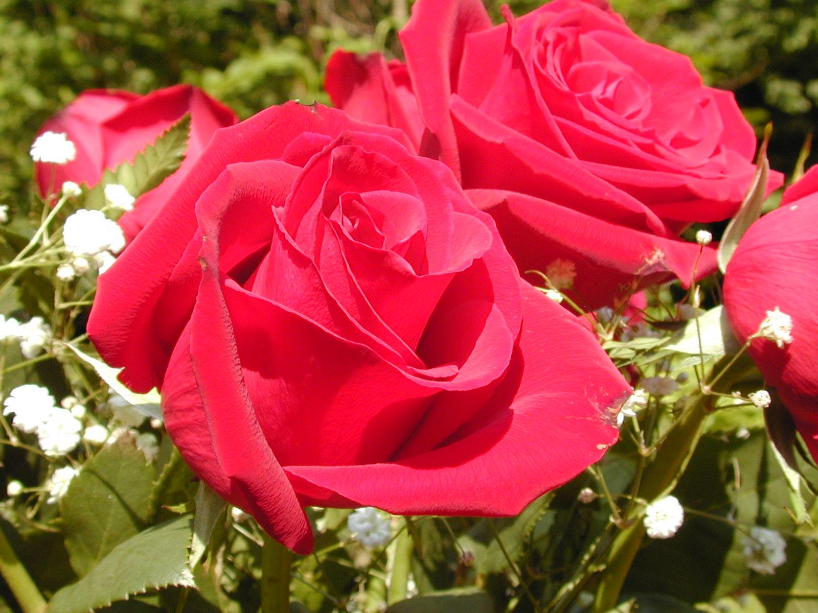 Allah Wallpaper Desktop 3d Beautiful Red Flowers Wallpapers Latest News