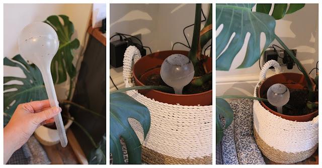 aqua globes for watering plants
