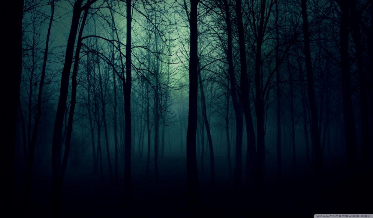 Dark Forest Wallpaper Desktop Wallpapers No Limit