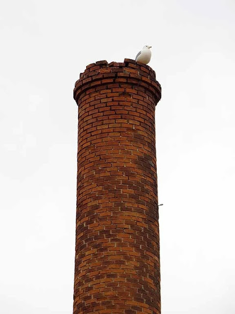 Gull on a chimney, via dei Bagnetti, Livorno