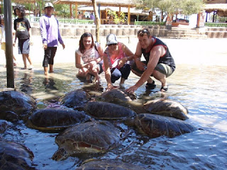 Pulau penyu bali 2017