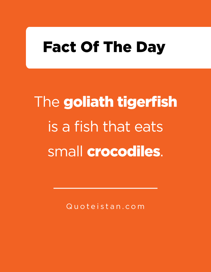The goliath tigerfish is a fish that eats small crocodiles.