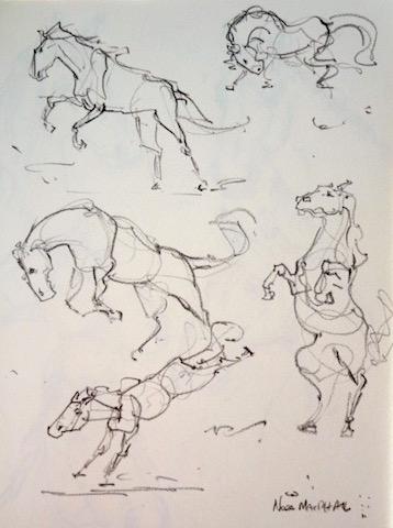 Nora MacPhail - Artist: Horse Anatomy