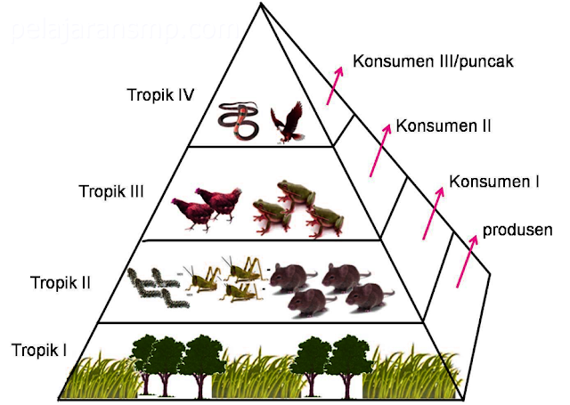 IPA SMP Materi Komponen Ekosistem, Tingkat Organisasi Dalam Ekosistem, Intergaksi Antar Organisme, dan Pelestarian Makhluk Hidup Lengkap
