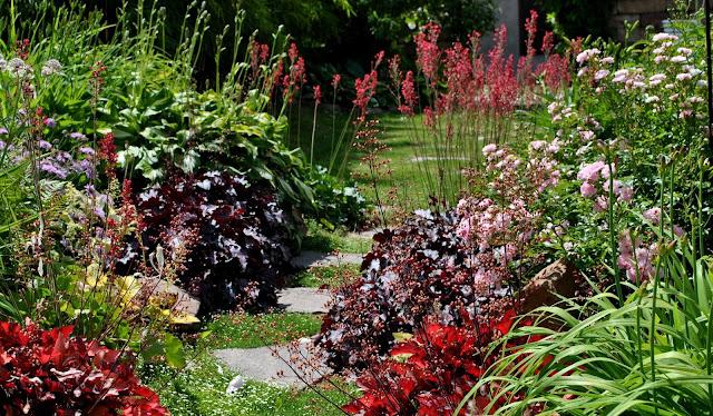 Heuchera im romantischen Garten