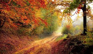 Bosque de amor frondoso, pleno de luminosidades.