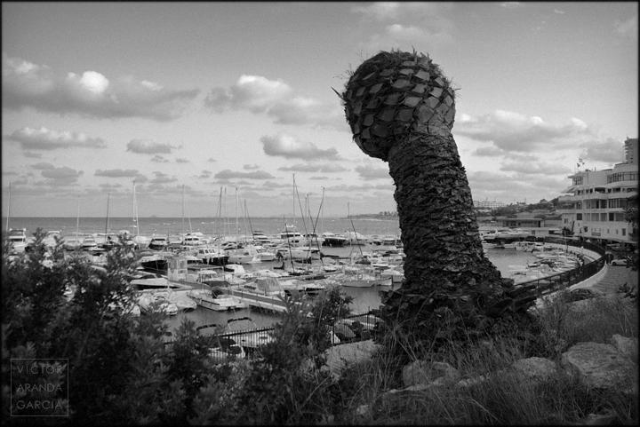 fotografia,campoamor,palmera,naturalenza,alicante,puerto,paisaje