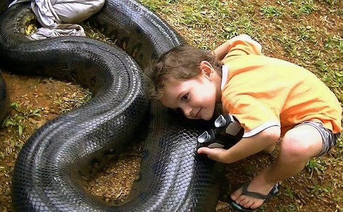 Giant Anaconda Snake ~ Damn Cool Pictures - photo#31