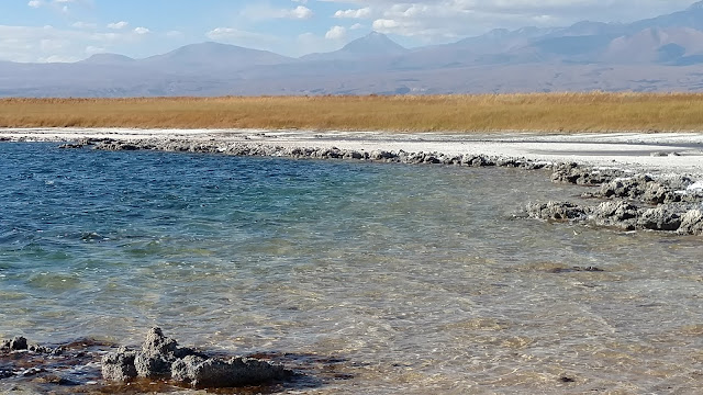 salty lagoon in the Atacama