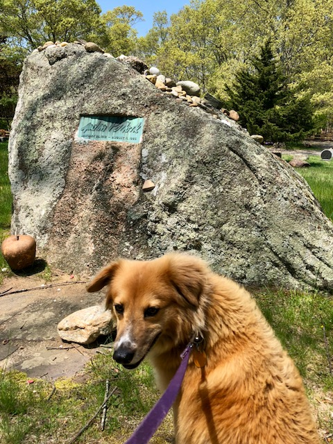 Boulder with brass plate that is the headstone for artist Jackson Pollack, with a fluffy orange dog in the foreground