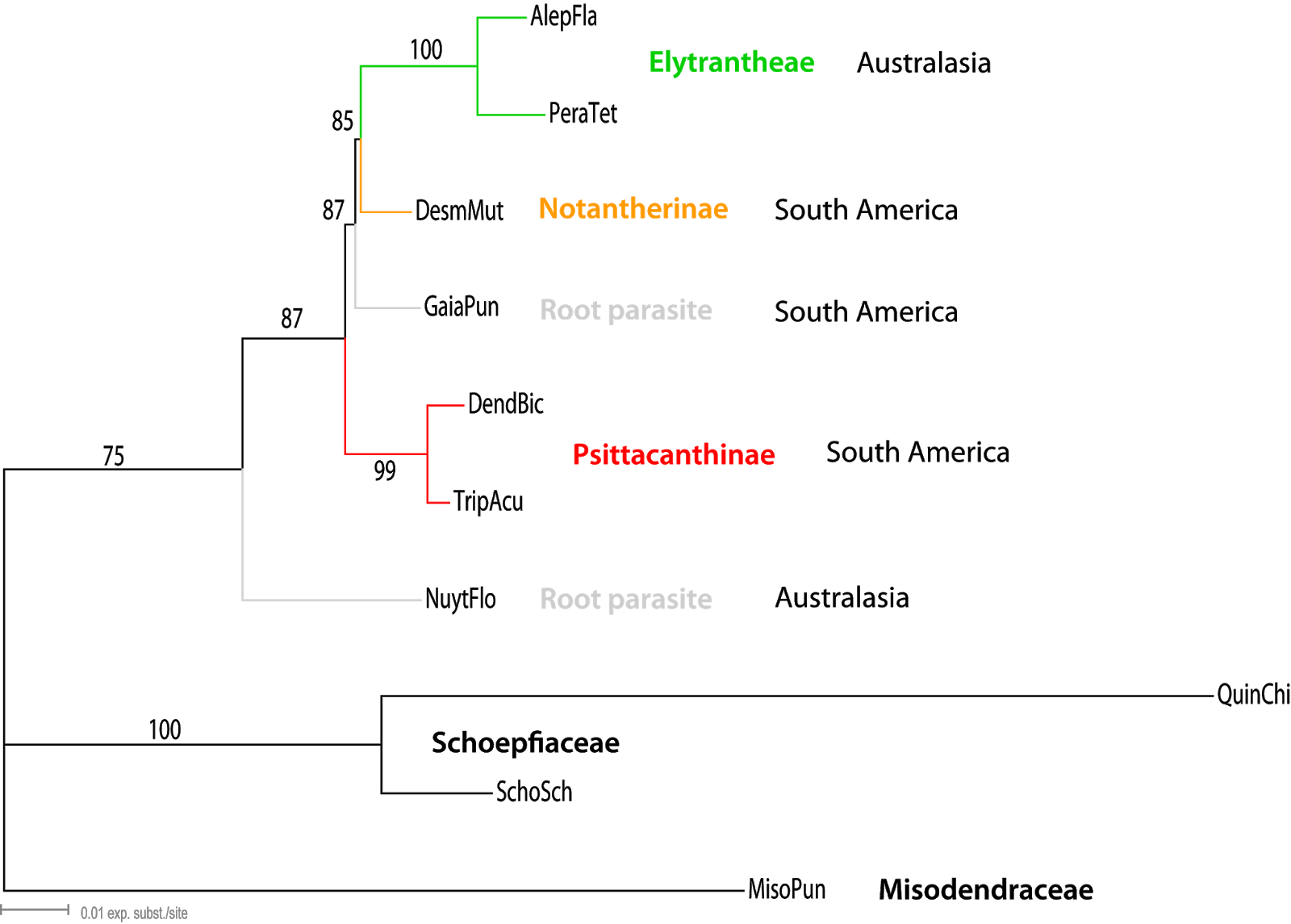a tree based on the accd plastid gene data included in su et al s 2015 up to seven genes data set grimm 2017 fig s6 3 note the position of the two