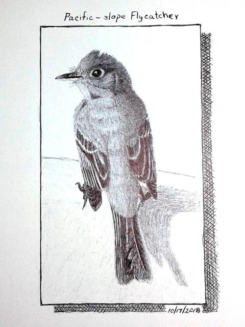 Pacific-slope Flycatcher in ballpoint pen