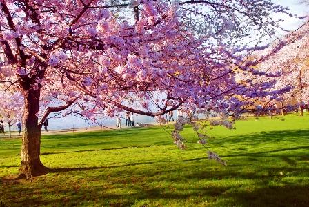 -spring.jpg
