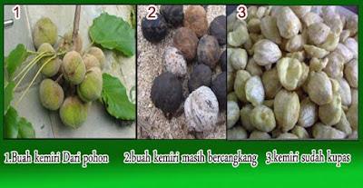 ialah flora yg bijinya dimanfaatkan sebagai sumber minyak dan rempah Supplier kemiri Indonesia