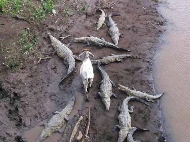 """15 động vật """"ngã cây"""" không biết xuất hiện ở Trái Đất nhằm mục đích gì"""