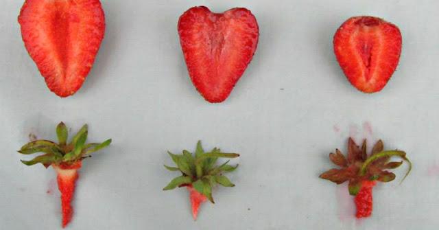 Как выбрать клубнику и не ошибиться?! Секреты выбора полезной ягоды!