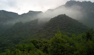 Tendrá México catálogo de Tipos de Vegetación Natural e Inducida