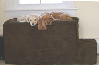 cães para apartamento