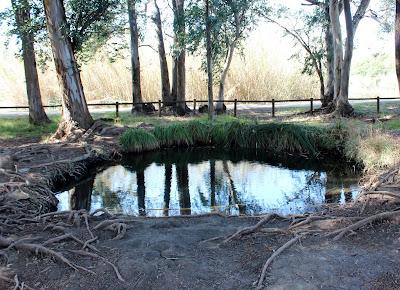 Ullals de Baltasar. Delta del Ebro