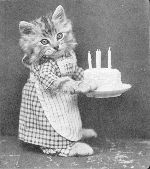 vintage birthday cats cat - photo #2