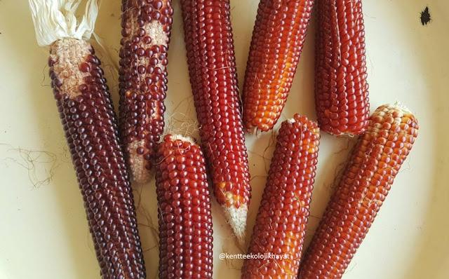 Ekolojik gıda