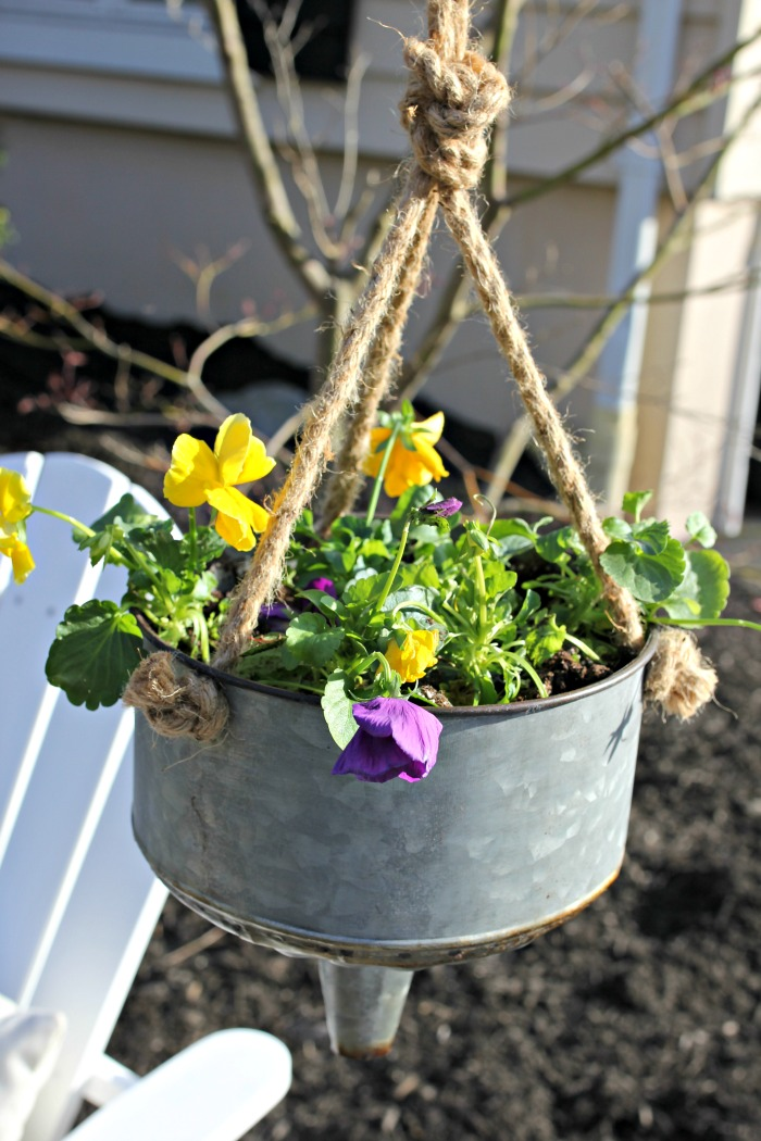 Pansies planted in galvanized funnel in spring landscaping