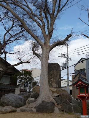野里住吉神社の大木