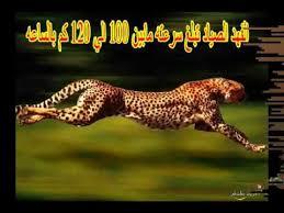 ما هو أسرع حيوان في العالم