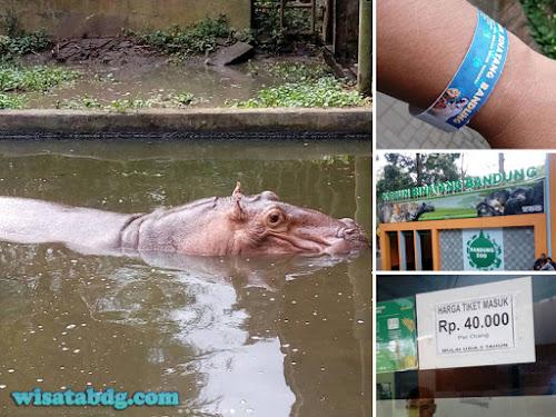 Harga tiket terbaru Kebun Binatang Bandung Lebaran 2017