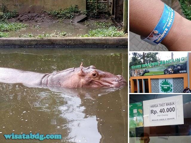 Tiket Masuk Kebun Binatang Bandung Kini Pakai Gelang Barcode