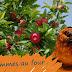 Recette de pommes au four fourrées au mascarpone, noix de pécan parfums vanille et cannelle