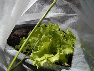bioveganer Pflanzenschutz