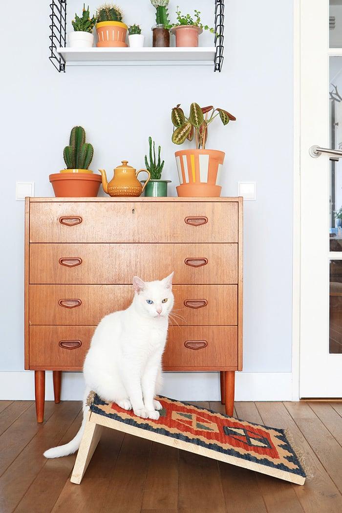 Arranhadores criativos para seu gatinho