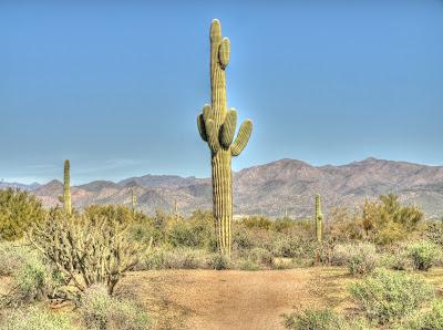 Gambar Kaktus Hidup di Habitat yang Gersang